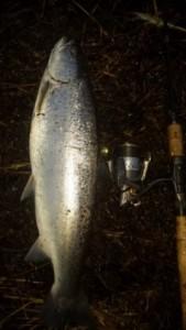 Kystfiskeri efter havørred om vinteren