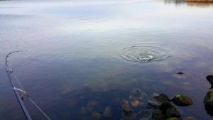 Okuma spinnestang, fiskestang til havørred