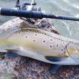 Salmonoid. Bedste stang til kystfiskeri efter havørreder