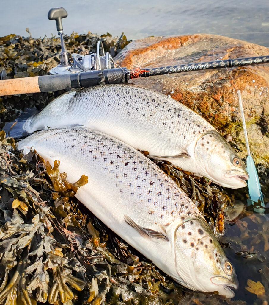 Savage Gear Salmonoid. Stang til kystfiskeri